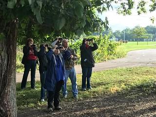 Group Spotting by Kaoru Tsubone