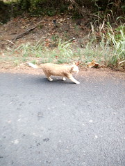 IMG_20180916_083322 - Photo of Montner