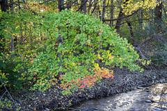Autumn in Maryland 23 Oct 2018  (260)Roddy Creek