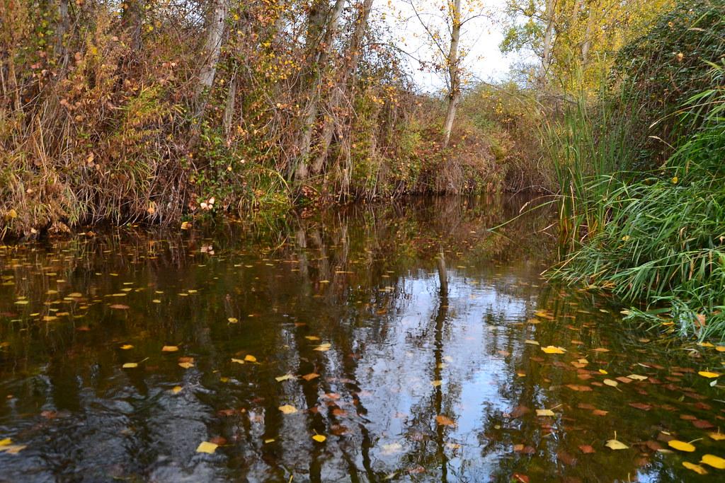 otoño_caida de las hojas