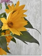 Flower in September-Szeptemberi virág