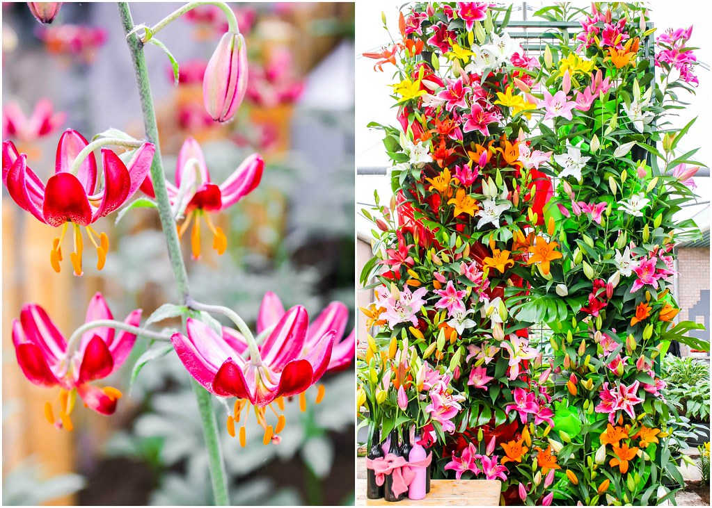 keukenhof-flower-holland-alexisjetsets