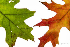 Fall Leaves 7044
