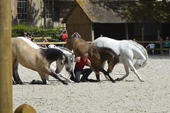 2018.06.21.130 HARAS du PIN - Toma et ses chevaux  de la Cie Atao - Photo of Courménil