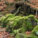 Moss on the rocks by Nigel L Baker