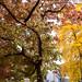 Autumn 2018 in south London | Dulwich Village-32