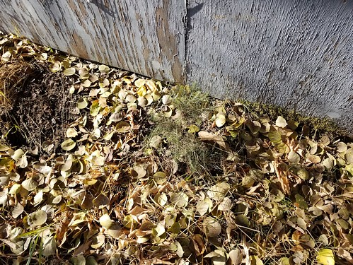 20181024.cleanup.sprucegroveperimeter.garageside.after.tree