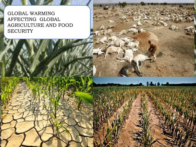 खाद्य-पदार्थों पर ग्लोबल वार्मिंग का प्रभाव