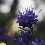 Flower Garden Bokeh - Tarbek - Schleswig-Holstein - Germany