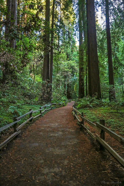 Muir Woods National Monument, Mill Valley 10.5.18 1