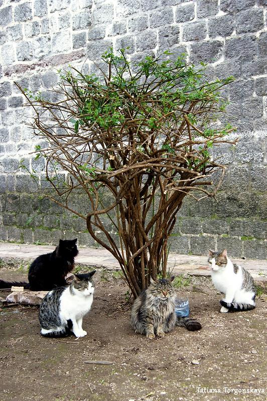 Коты возле церкви Св. Марии Речной