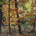 Autumn at its best - av evisdotter