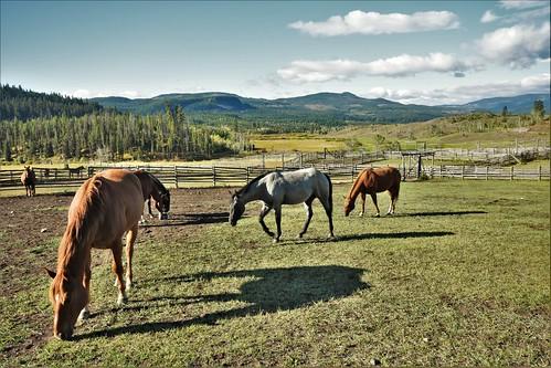 Mid BC ranching