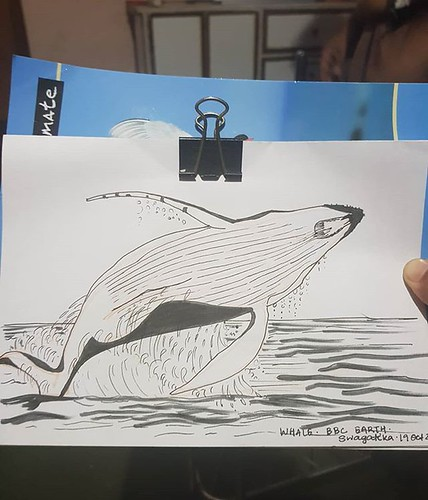 #whale ref. BBC Earth . #inktober2018 #inktober #day12whale