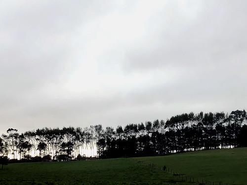 57 Trees On Horizon