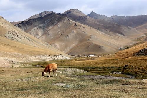 kyrgyzstan bucolic scene scenery landscape kyrgyz land cow tash rabat valley mountains central asia yurts