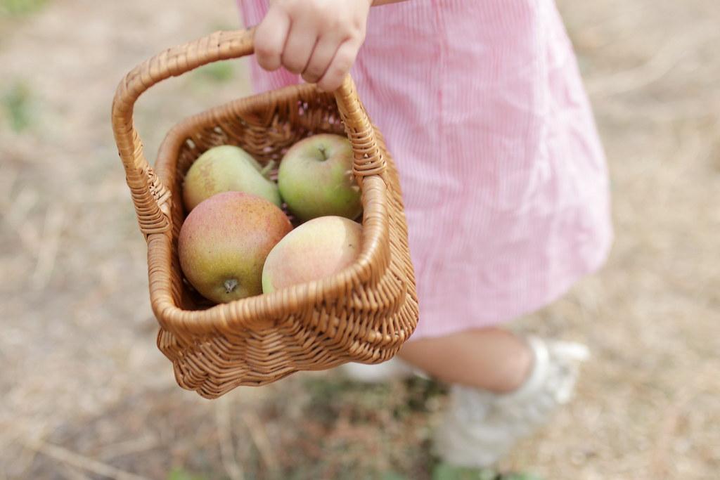 apple picking 2018