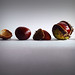 Conkers in a Row by Smiffy'37