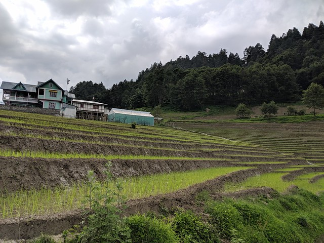 one of the many paddy fields