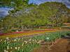 Photo:チューリップの花園で XV By jun560
