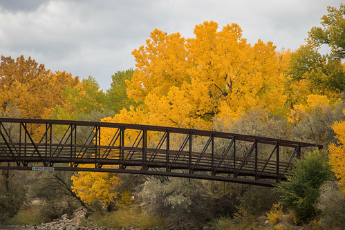 Cottonwoods in the Fall / Bridges and Fall foliage