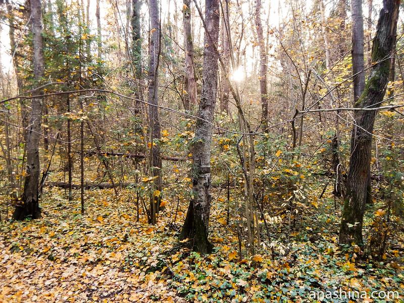 Октябрьский лес, Московская область