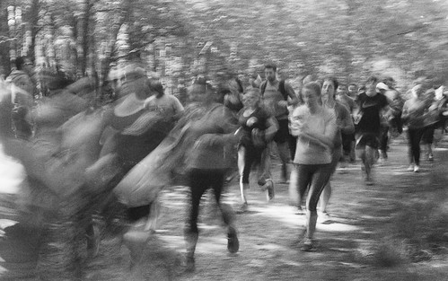Runners in the Forest