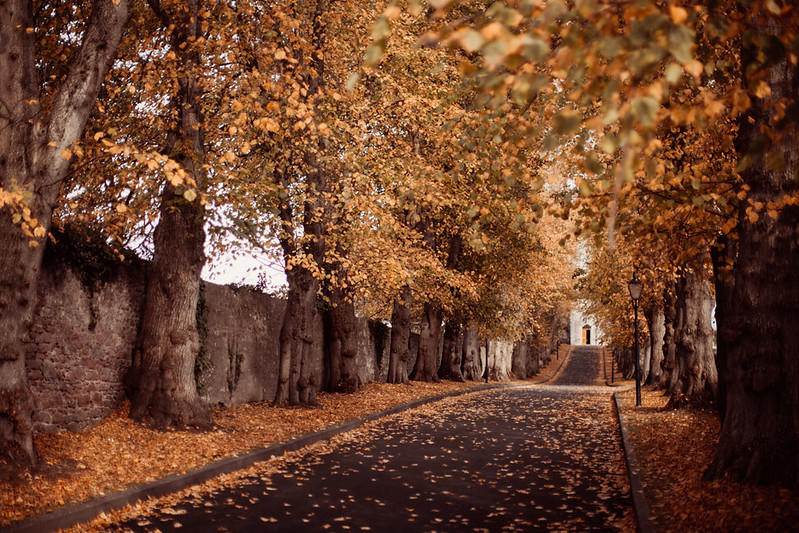 autumn path-43