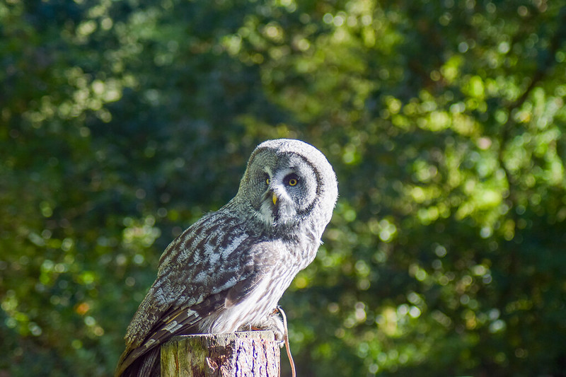 NYM - National Bird of Prey Centre - Day trips from York