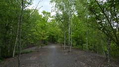 RNR d'Annelles, Lains et Pont Pinnet Terril n° 136A, Roost Lains Est (bis)  (2)