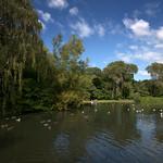 Lake at Haslam Park, Preston