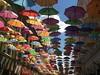 Lustige Schirme in der Fußgängerzone von Temeschwar