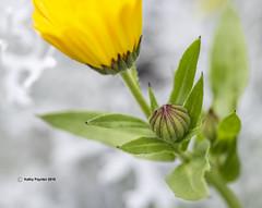 Flower 7095
