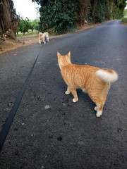 IMG_20180916_083033 - Photo of Montner