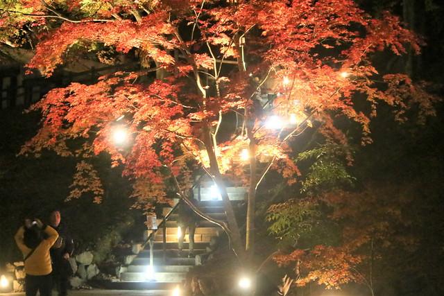 kitanotenmangu-lightup027