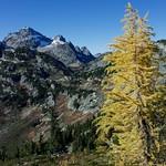 Maple Pass Larches