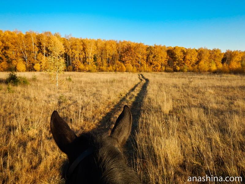 Дорожка к лесу, Протасово, Московская область, осень