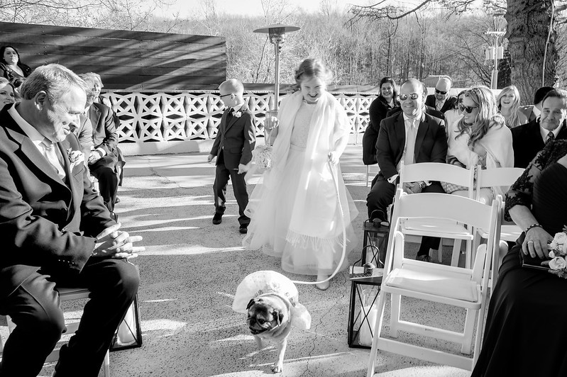 Include your dog in your wedding and have your flower girl walk her down the aisle!