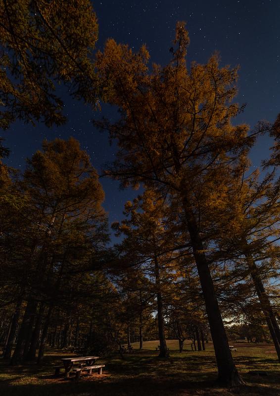 autumn moonnight