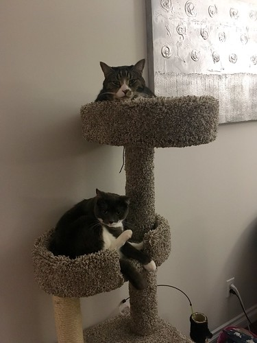 Watson & Crick got a new cat tree for an early birthday