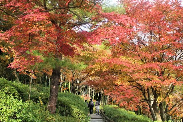 tenryuji-koyo2006