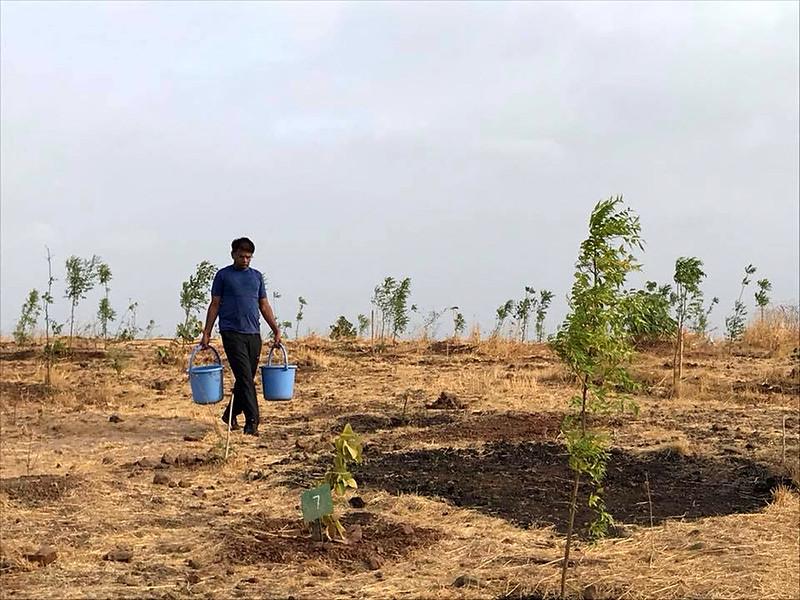 पौधों को पानी देते एसपी जैन