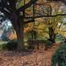 Autumn In Elmwood Park, Doncaster.