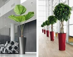 Things That Make You Love And Hate Modern Shrubs | modern shrubs