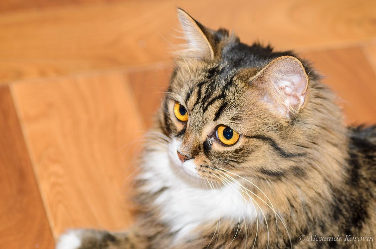 20121222_210303_кошки