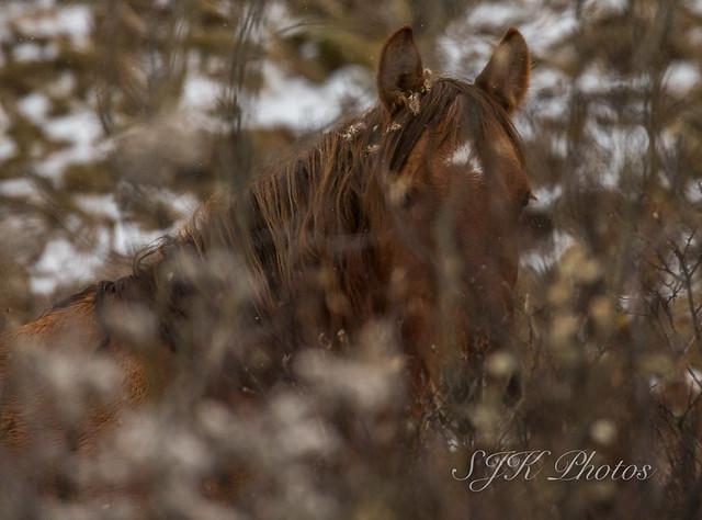Wild Horse, Canon EOS 6D MARK II, Sigma 150-600mm f/5-6.3 DG OS HSM | S