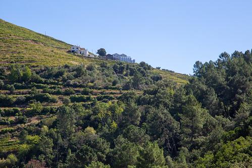 Quinta da Pedra Alta
