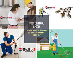 Pest Control Services in Epsom Areas