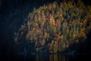 Erleuchteter Herbst