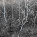 1810_1655 Aspen Coulee by wild prairie man